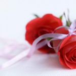 red-rose-wedding-flower2560-x-1600-121-kb-jpeg-x